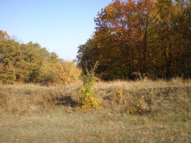 фото деревьев, осенний лес