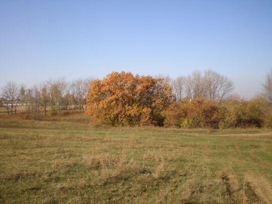 фото деревьев, осень золотая