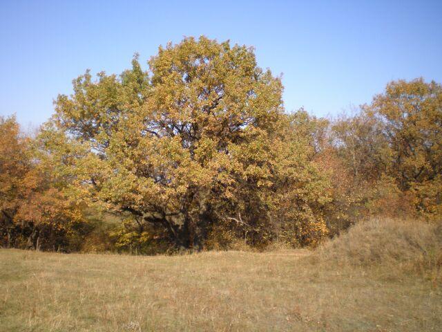 фото деревьев, осень