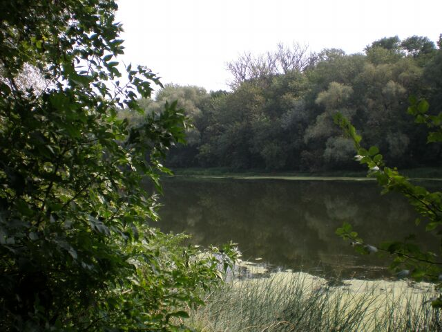 фото деревьев, река