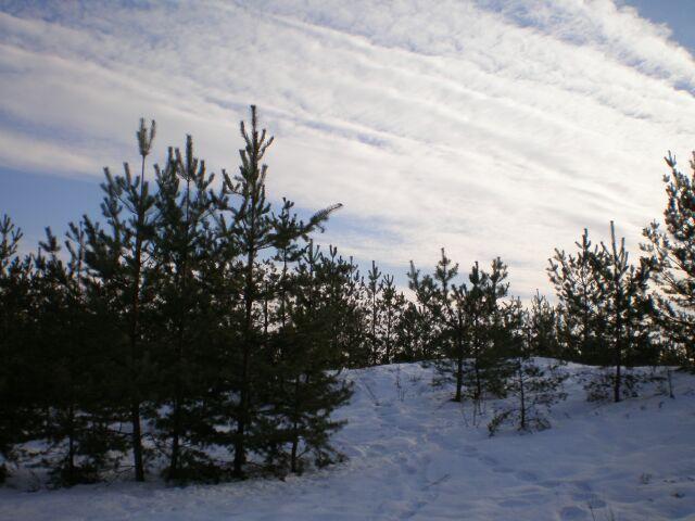 фото деревьев зима