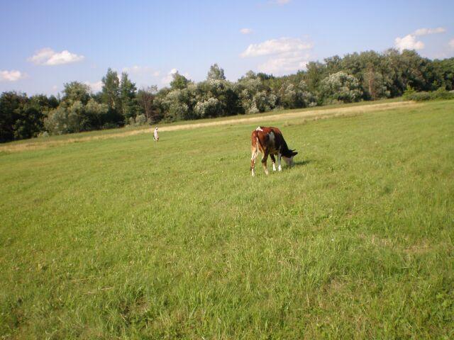 фото флоры с коровкой