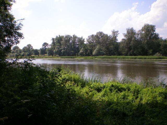 фото флоры, река
