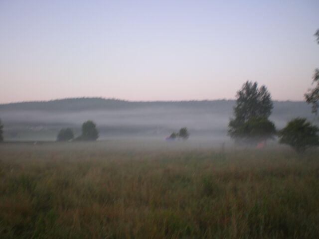 фото флоры - туман