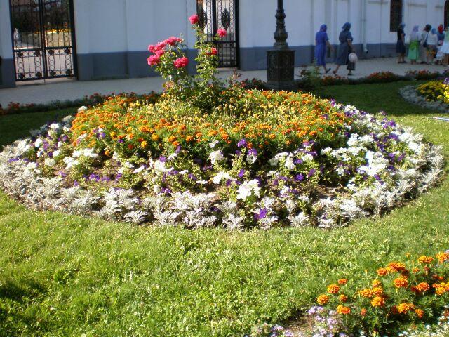 фото флоры цветы клумба