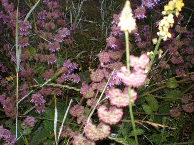 фото флоры цветы