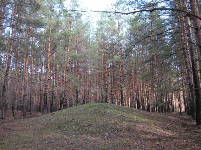 фото грибов съедобных лес