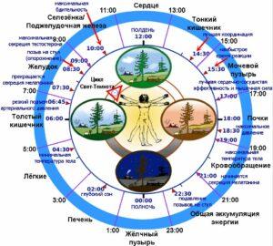 Биоритмы - структура лучшего режима дня